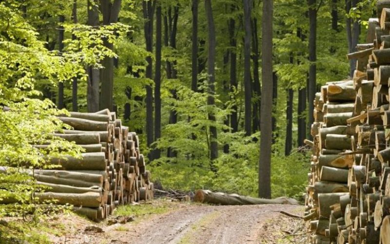 Silvicultura face milioane de euro. Top 5 cele mai puternice ocoale silvice din județ