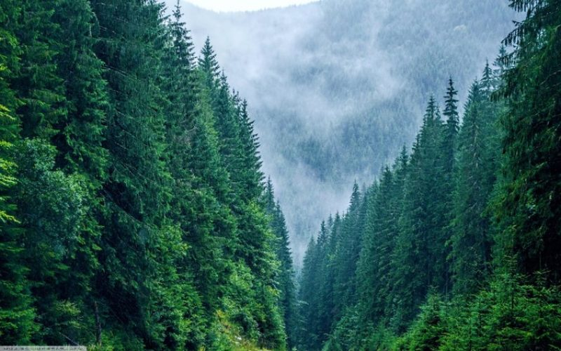 Comunele TELCIU și ȘANȚ sunt în TOP 15 cei mai mari proprietari de păduri din România