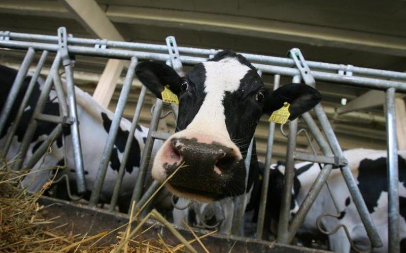 Fiul primarului din Budacu de Jos investește într-o fermă de bovine, o făbricuță de lapte  și o plantație de prun și cireș
