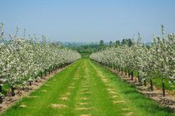 Ferma de 172 ha a companiei MIRO SA este scoasă la licitație pentru 3 milioane euro, plus TVA