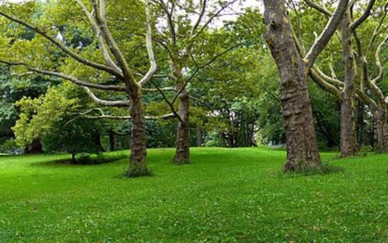 CML va construi un parc de agrement în Wonderland