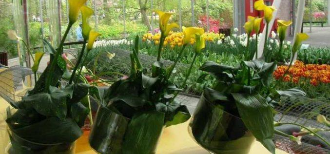 O familie din Baia Mare ce rulează 1 milion de euro în comerțul cu flori investește la Bistrița