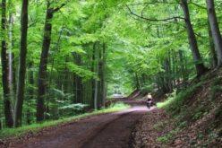 Investiții de aproape 2 mil. euro în două drumuri forestiere la Parva