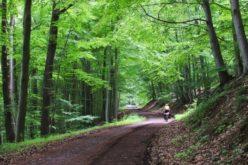 La Bistrița Bârgăului se investesc 6,4 mil.lei în drumurile forestiere