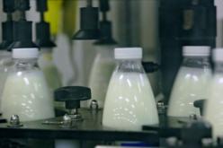 Familia Peica, proprietară a companiei AGRO ARDEAL, va deschide o fabrică de lactate