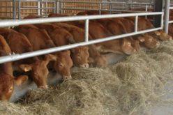 Antreprenorul Ovidiu Ciuruș vrea să lanseze un brand cu produse din carne de vită