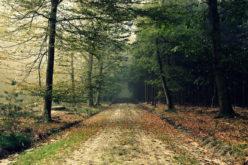 Lucrări de aproape 1,5 mil.euro pentru drumuri forestiere la Parva