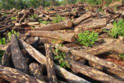 Transporturile de lemne vor fi monitorizate prin GPS, anunță Ministerul Mediului