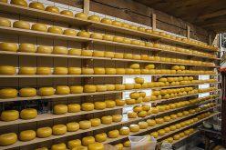 La ferma din Orheiu Bistriței vor fi făcute brânzeturi sub brandul AgroArdeal