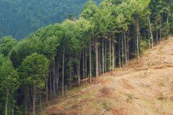 Modificarea Codului Silvic: Orice furt de lemn, indiferent de cantitate, ar putea fi infracțiune