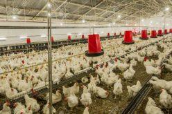 Două ferme din Bistrița-Năsăud, scoase la vânzare cu 800.000 euro
