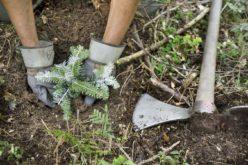 OMV PETROM contribuie cu 4,6 mil. euro la împădurirea României