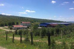 """Azi e """"Ziua Z"""" pentru ferma MIRO din Petriș. Cine vine cu 3,7 mil. euro să ia 96 ha de măr, prun, cireş, cais şi viţă de vie?"""