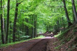 Cu 8,8 mil. lei, Amicii Building reabilitează 5 drumuri forestiere în Bistrița Bârgăului