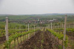 Cramele premium, printre care și LILIAC, cu vie lângă Lechința, cer ajutor statului