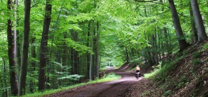 Cu 9,4 mil. lei, CML va moderniza două drumuri forestiere din Parva
