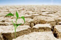 Despăgubirile pentru secetă vor fi aprobate la rectificarea bugetară