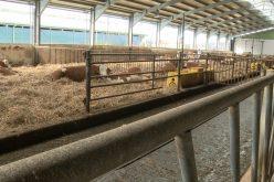 Investiție de peste 5 mil. lei într-o fermă zootehnică în Ilva Mare
