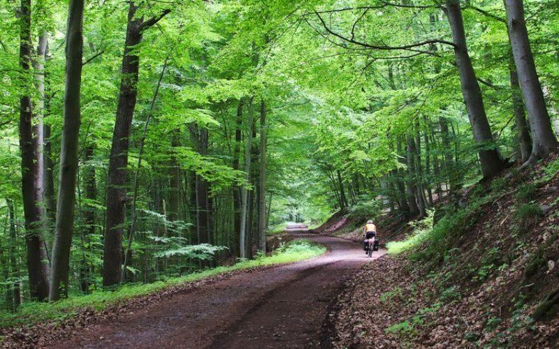 Cu cât modernizează Transilvania Grand Construct patru drumuri forestiere