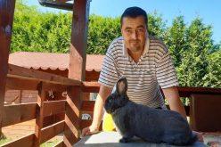 Patru veterinari bistrițeni au înființat un club al iepurașilor de rasă
