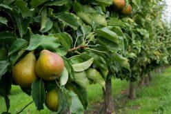 O tânără din Lechința înființează o livadă eco de 7 ha cu pomi fructiferi